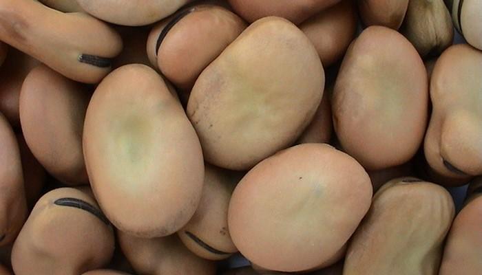 польза и вред бобовых для организма