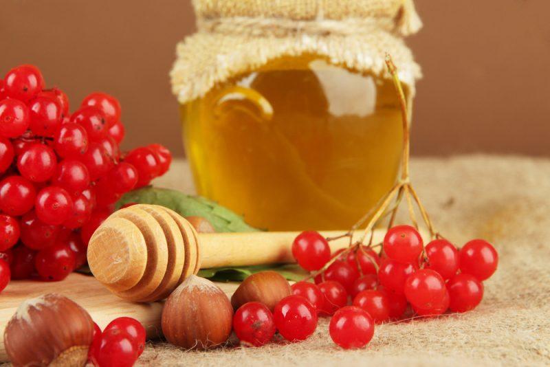 полезные свойства калины с медом и противопоказания