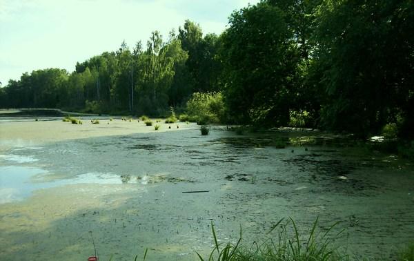 ряска в пруду польза или вред