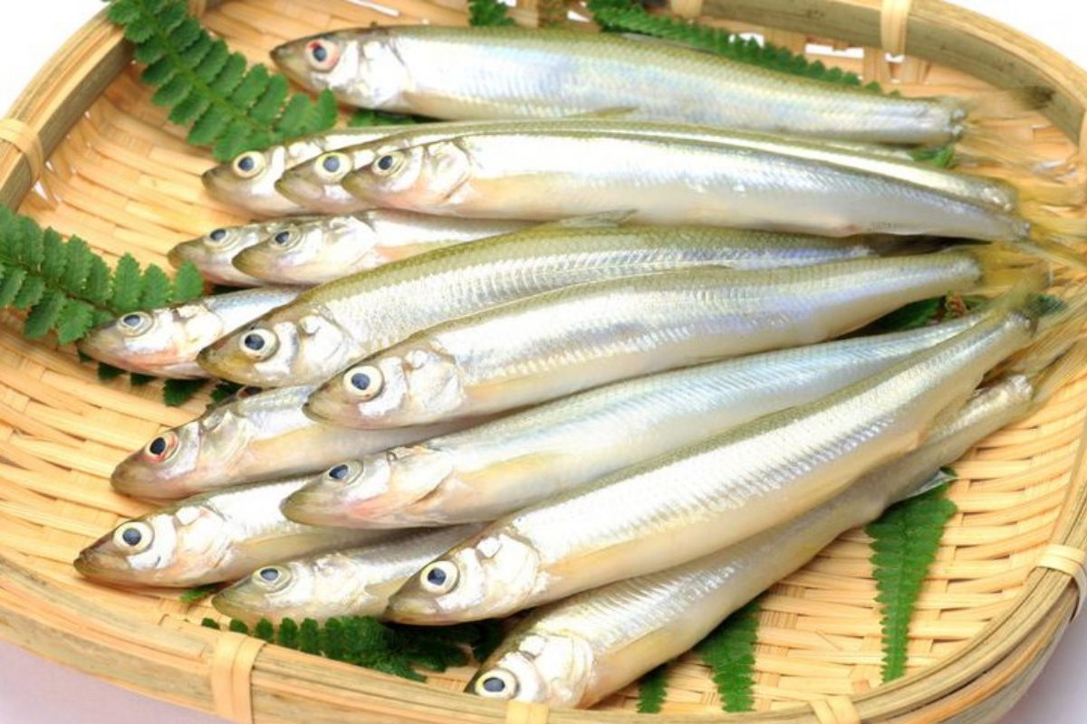 рыба песчанка морская полезные свойства и противопоказания