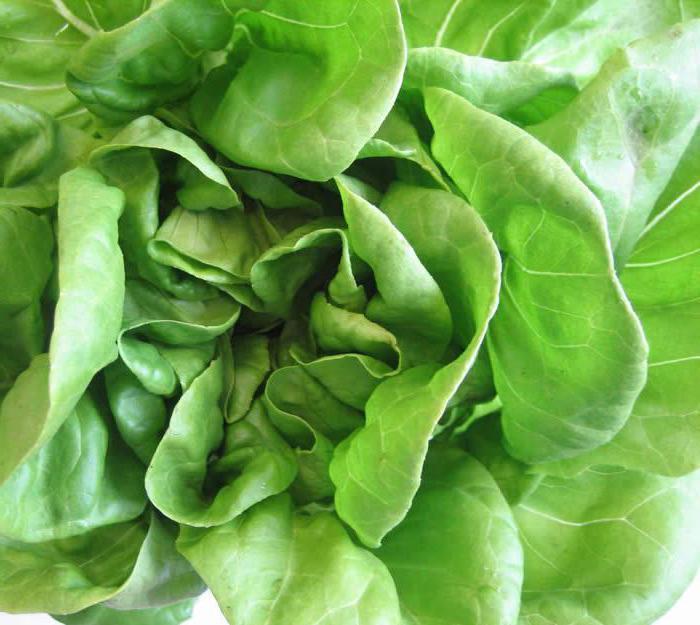 салат польза и вред для здоровья