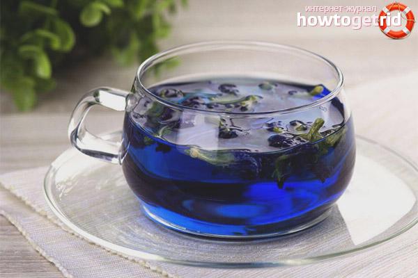 синий чай из тайланда полезные свойства и противопоказания