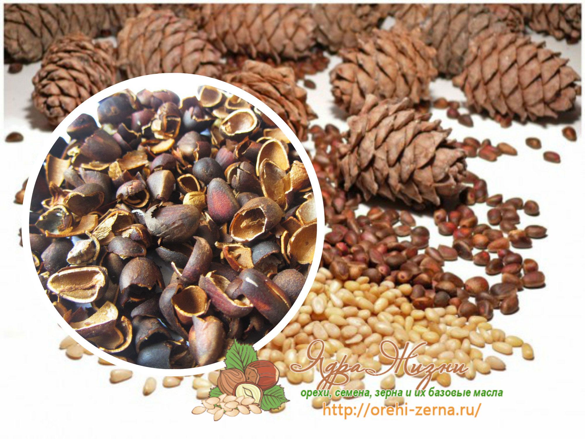 скорлупа кедрового ореха полезные свойства и применение