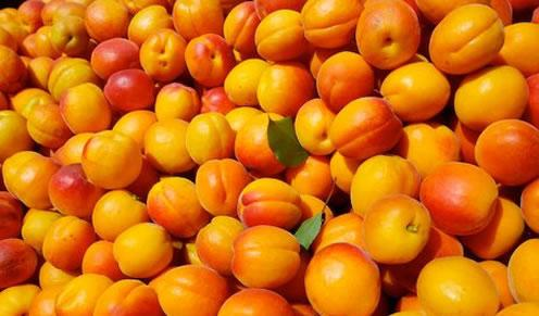 сушеные абрикосовые косточки польза и вред