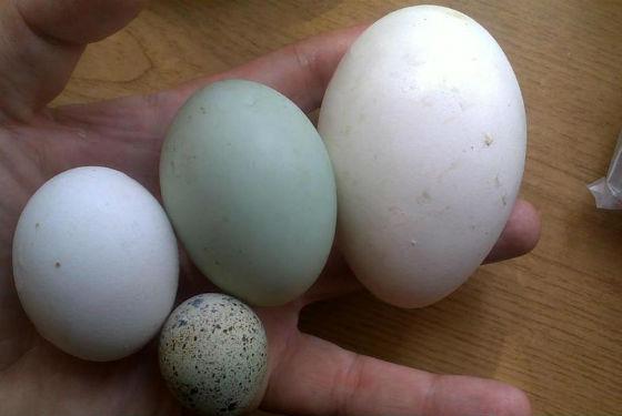 сырой белок яйца польза и вред