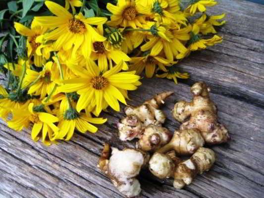 топинамбур польза и вред кулинарные рецепты