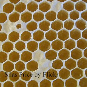 вред и польза меда в сотах