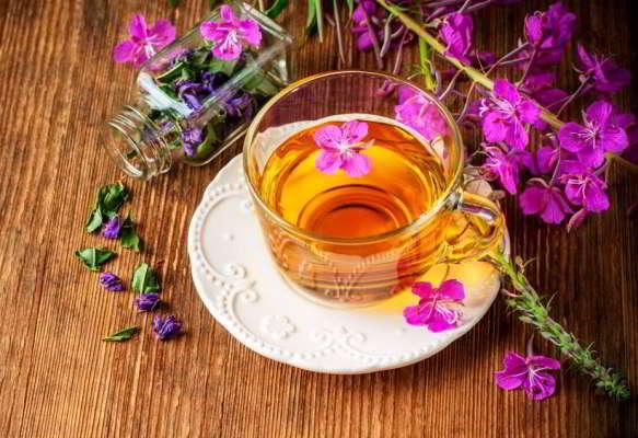 вред и польза от иван чая