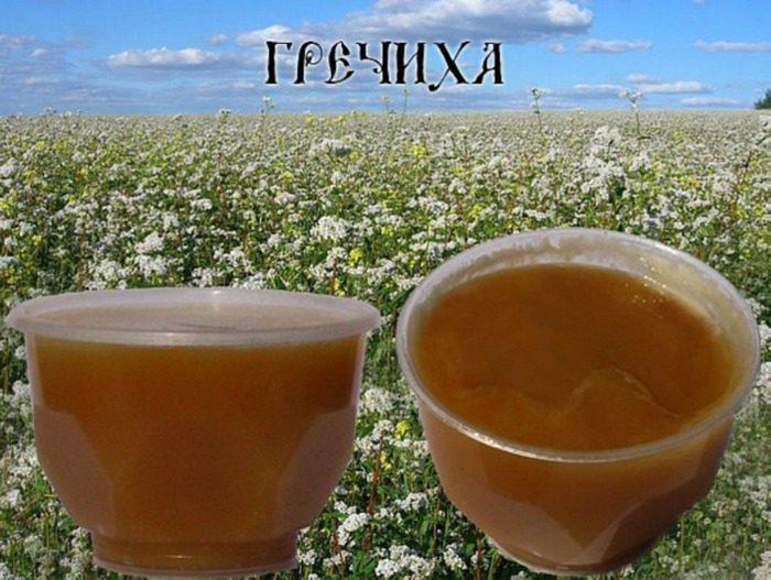 мед и почки польза и вред