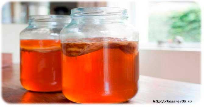 чайный гриб польза и вред в гинекологии при мастопатии