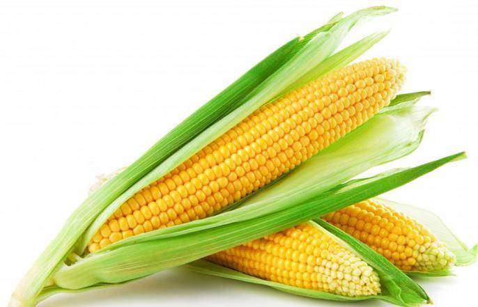 чем полезна кукурузная мука для организма человека