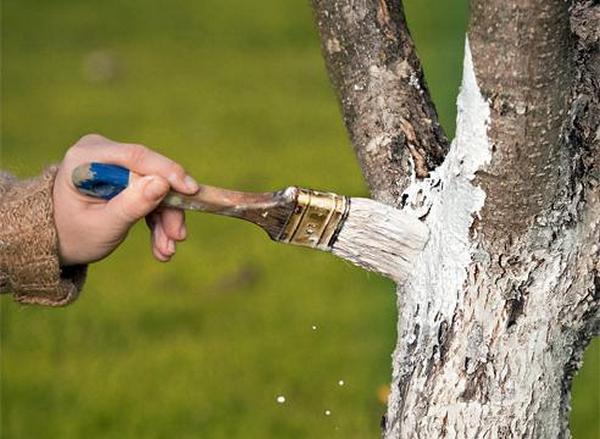 чем полезна шелуха от чеснока в огороде