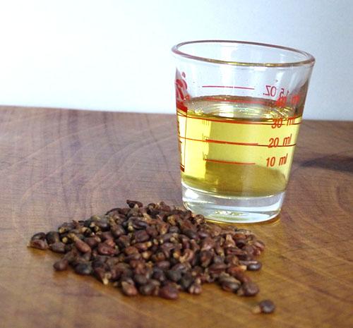масло из косточек винограда польза и вред для лица