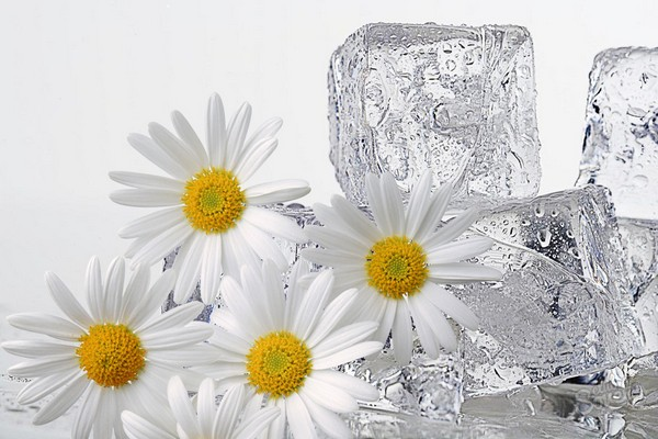 протирание лица кубиками льда из ромашки польза и вред