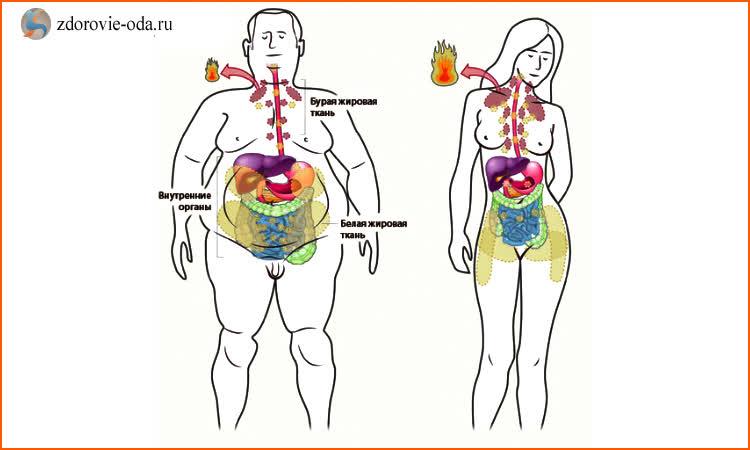 рыбий жир польза и вред для здоровья