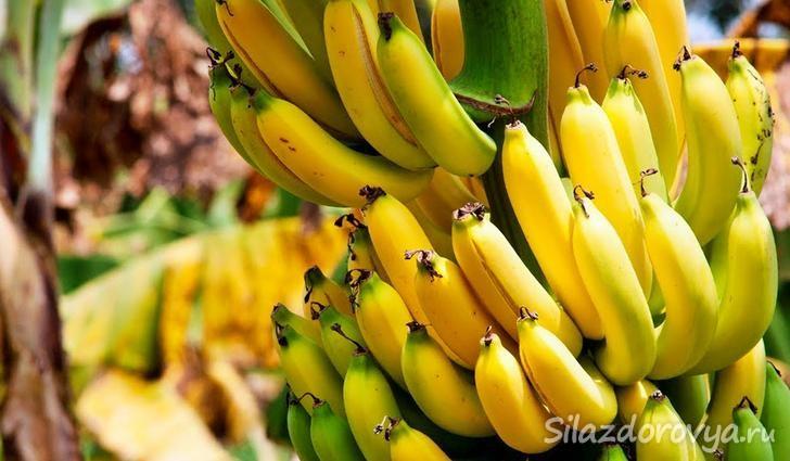 бананы польза и вред для организма калорийность