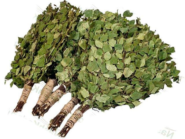 березы листья польза и вред для организма