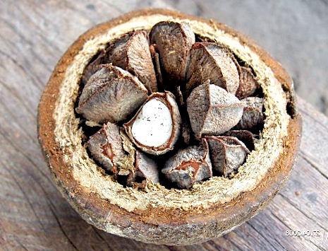 бразильский орех полезные свойства и противопоказания для мужчин