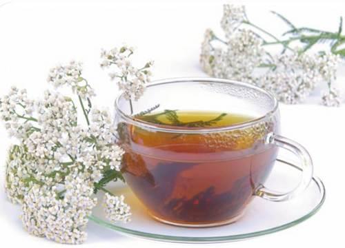 чай из тысячелистника польза и вред