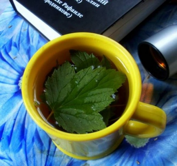 чем полезен чай из листьев смородины и вишни