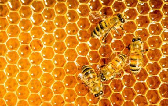 чем полезен мед и какие в нем витамины