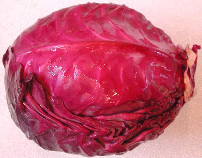 капуста краснокочанная польза и вред рецепты
