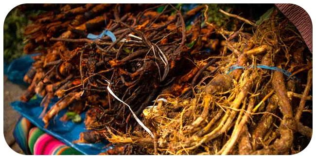 корень лопуха одуванчика пырея полезные свойства и противопоказания