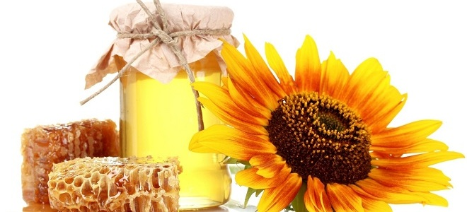 мед из подсолнуха польза и вред