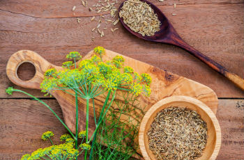 настойка из семян укропа на водке полезные свойства