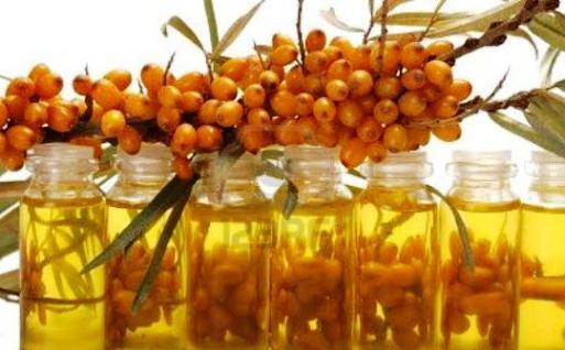 облепиховое масло применение внутрь польза и вред