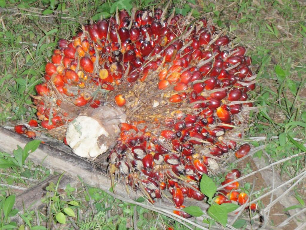 пальма вред и польза и вред