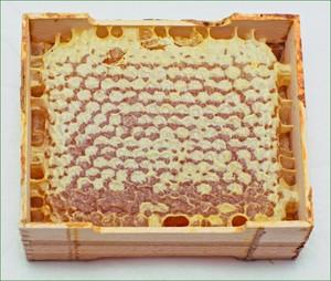 пчелиные соты полезные свойства как употреблять в пищу