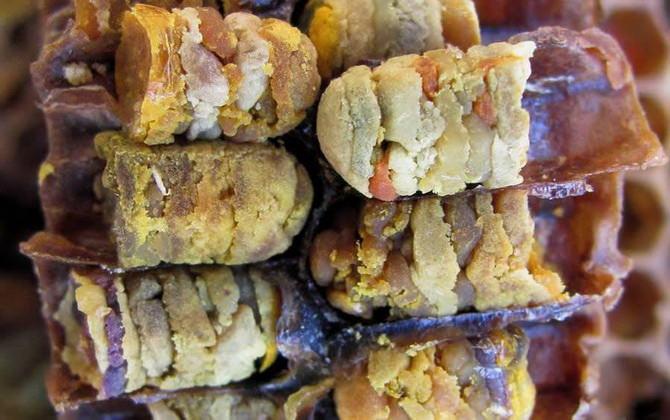 перга пчелиная полезные свойства как принимать при онкологии