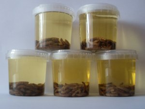 полезные свойства восковой моли как используется в народной медицине