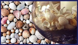 ракушки в аквариуме польза или вред