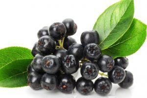 рябина черноплодная полезные свойства и противопоказания при давлении