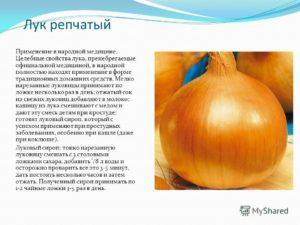 свойства лука в народной медицине полезные свойства и противопоказания
