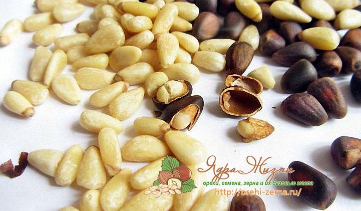 чем полезен кедровый орех для организма человека