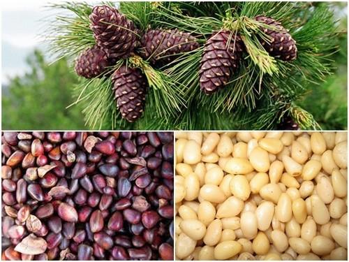 кедровые орехи полезные свойства для женщин при миоме