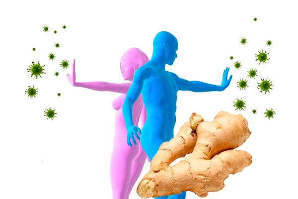 корень имбиря полезные свойства для женщин при бесплодии