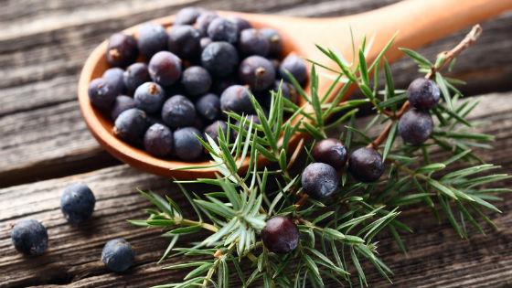 плоды укропа пахучего полезные свойства и противопоказания