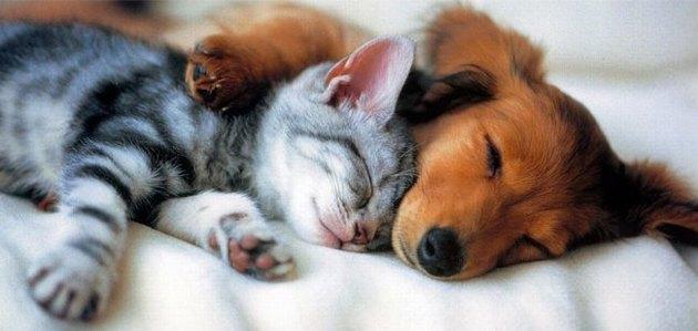 польза животных и вред животных в