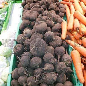 редька черная польза и вред рецепты