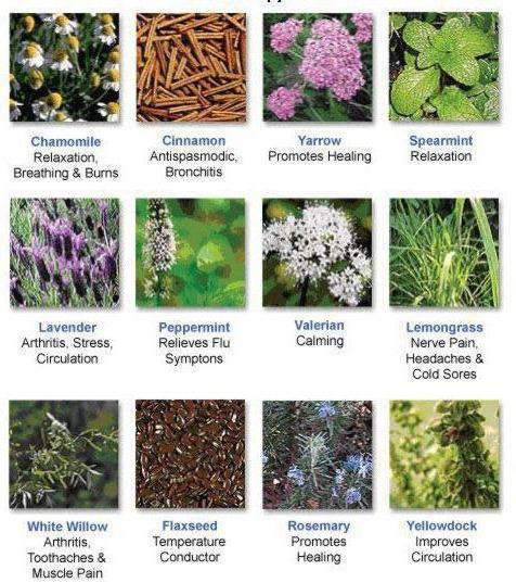 все про эфирные масла и их полезные свойства