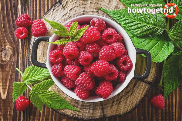 ягоды и листья малины полезные свойства и противопоказания