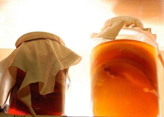 чайный гриб полезные свойства и как за ним ухаживать
