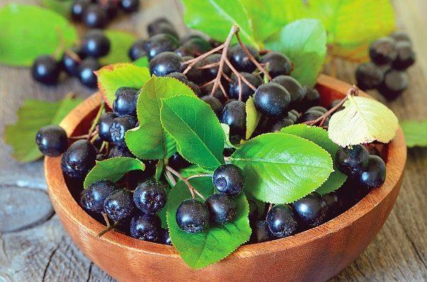 чем полезна черноплодка и как ее употреблять