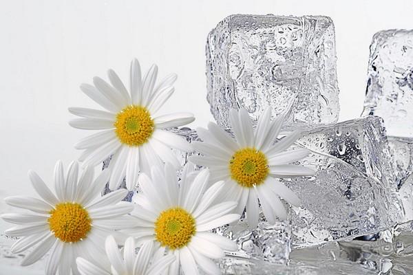 чем полезно протирать лицо кубиком льда с ромашкой