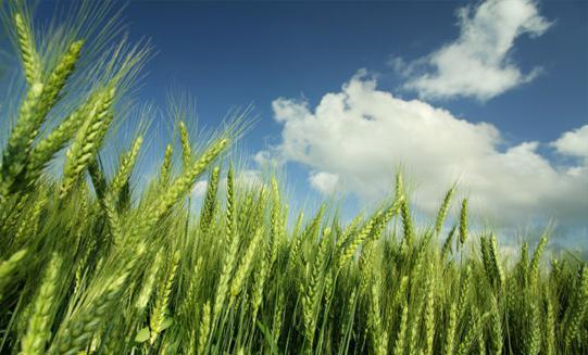 что полезного в макаронах из твердых сортов пшеницы