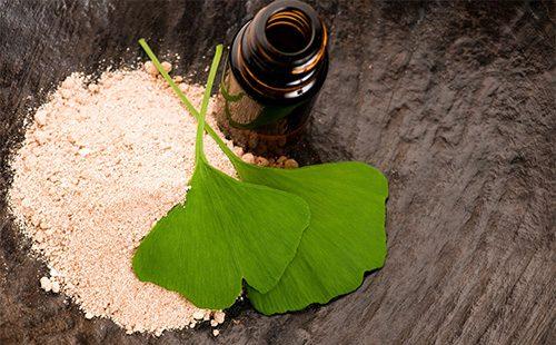 гинкго билоба листья полезные свойства и противопоказания